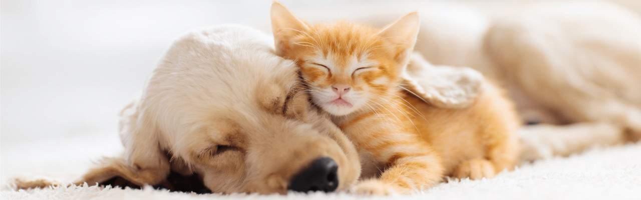 maca i kuca Happy Dog Club Veterinarska apoteka i pet shop