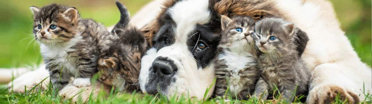 Happy Dog Club sve za kuce i mace na jednom mestu