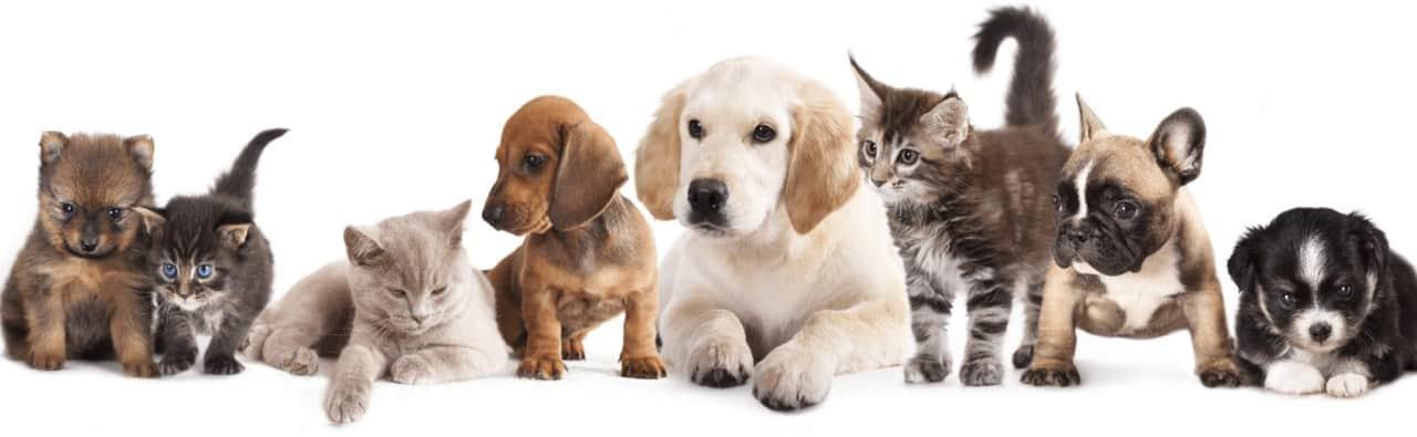 Happy Dog Veterinarska apoteka i pet shop sve za kuce